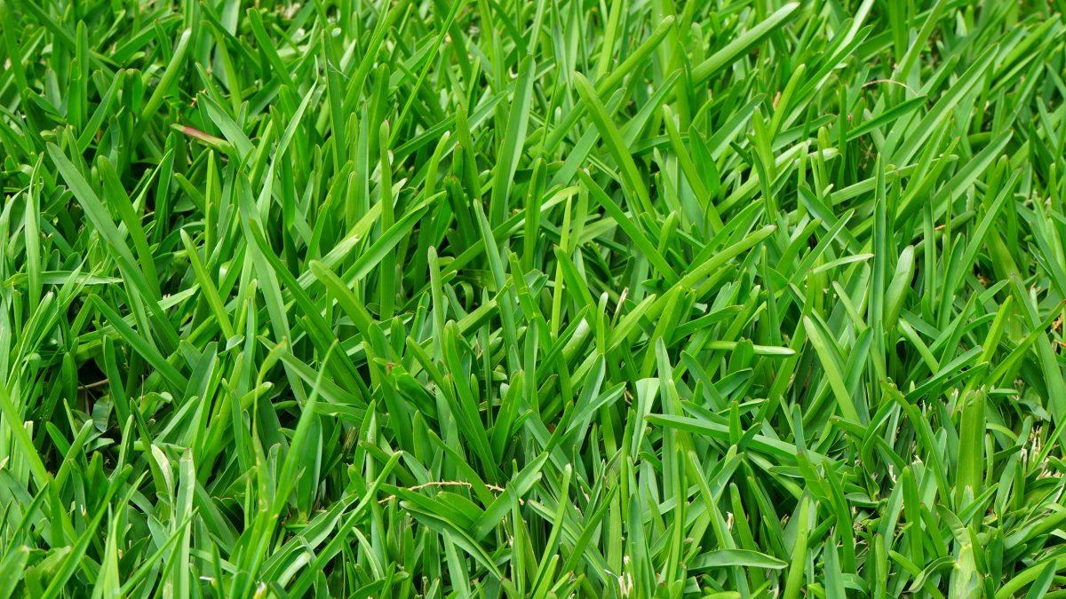 Как да засеем и косим тревната площ?